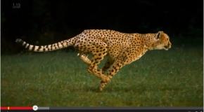 瞬発力!!(Leap into motion) 水泳のストロークも同じ!!
